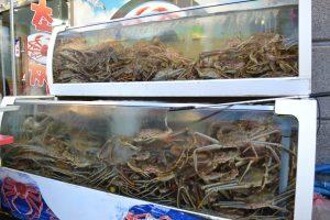 korea crab